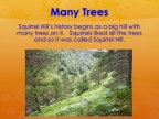 2 Many Trees Early Times